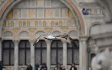 Kurzbesuch in Venedig zum Karneval_26
